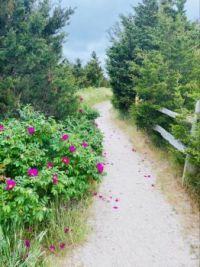 Cape Cod pathway