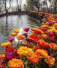 Garden in Turkey