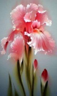 Precious Pink Iris