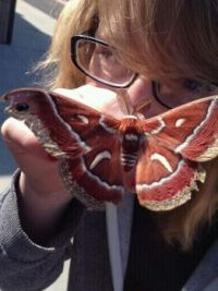 holly with moth