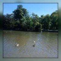 South Park Lake 1