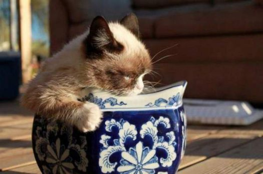 Dutch pottery, Siamese kitty