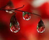 Red Raindrops