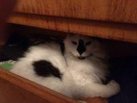KC Sleeps in a Dresser Drawer