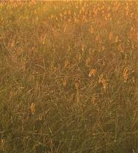 almost abstract-grass--medium