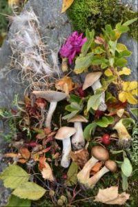 Alaskan Fall Treasures (smaller)