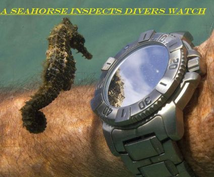 Inspects Divers Watch