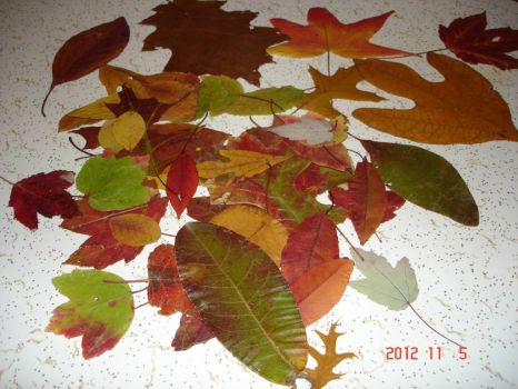 Autumn Leaves from a Friend