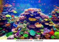 stock-photo-coral-reef-and-tropical-fish-in-sunlight-singapore-aquarium-239618608