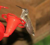 hummers 7-28-2015 053