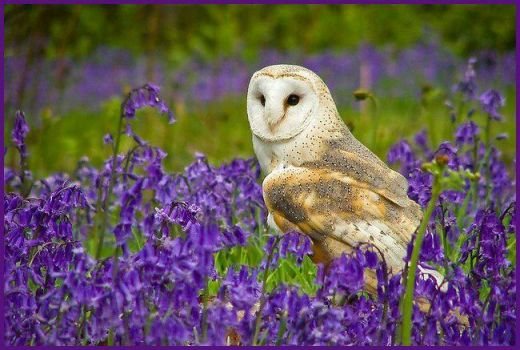 Owl enjoying the flowers