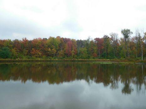 Ohio Autumn Leaves