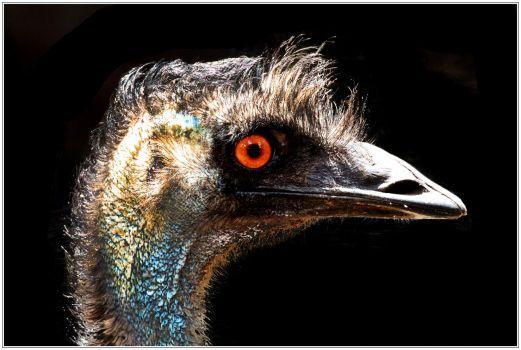 Ol' Man Emu
