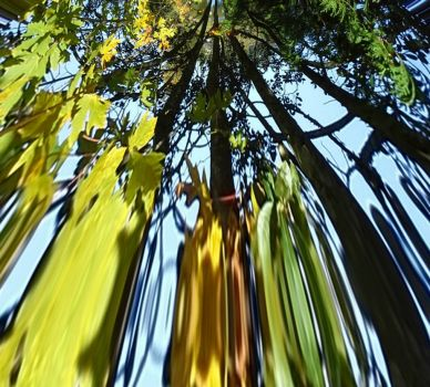 Blur of autumn leaves