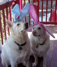 Waiting for the Easter Bunny