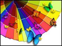 butterflycolors