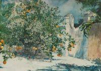 Orange Trees Vintage Art