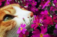 Kitty in the Flowers