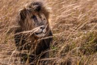 Scar of the Masaai Mara by Susan Portnoy