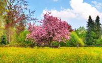 spring-desktop-wallpaper-1920x1200-1008118