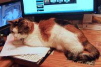 Feline Office help