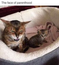 the face of parenthood