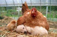 Nevlastní máma
