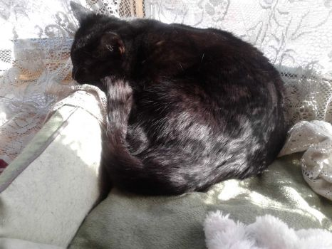Raven napping in the sun