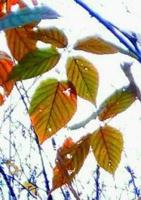Autumn foliage against a white sky