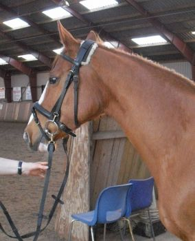 I just bought this horse :o)