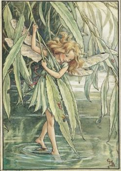 The Willow Fairy ~ for Ocracoke1