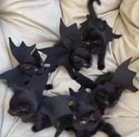We's all going to the party to scare everyone!