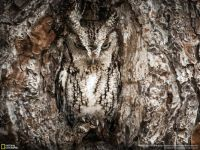 Can you see the owl?