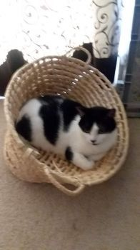Kaw in his Basket