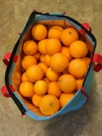 just picked from my orange tree 1-2020