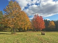 Fall foliage: lower meadow