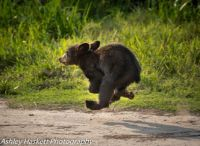 bear cub on the run