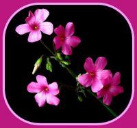 Pinknblack Floral