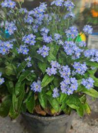 Pretty Purple Flowers