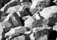 Bunny on the rocks