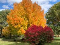 Fall color in Nebraska