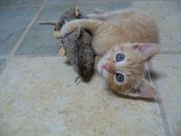 100_0269 Baby Max w/ toy rat