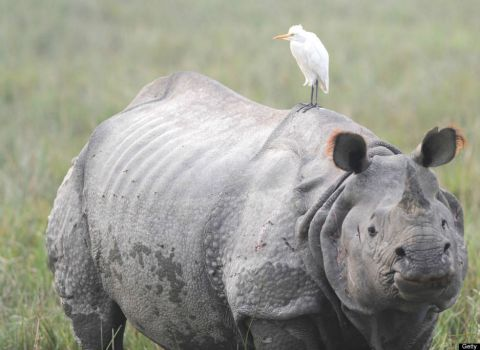 Write a Caption!  rhino & friend