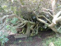 tree hideaway