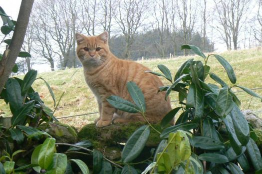 George the ginger cat surveying all