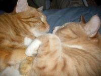 Angus and Misty need their sleep,  play does so sap the energy