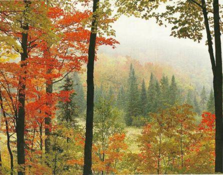 Fall Scene in Ontario