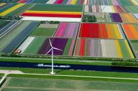 Tulip Fieldsbirds-eye-view