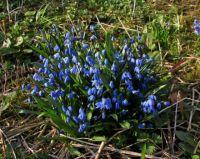 Spring - Bornholm 2