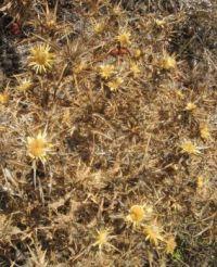 Flora of Sardinia